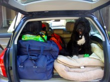 Teddy didn't want to be left behind!