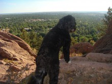 Teddy looks over Boulder from the Red Rock trail in Settlers' Park. Could it be he's sad to leave, too?