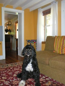 Teddy feels at home in the small downstairs living room.