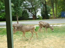 Visitors on the front lawn of our Pearl Street house.