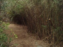 Morgan and I worked in one trail run before the weather hit. It started with a couple of miles through thick bamboo.