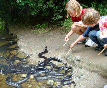 When it comes to eels, the kids are braver than I!