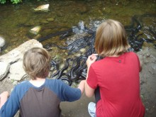 Kyle and Colly meet the eels -- and hear the squeals.