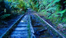 The Charming Creek railroad tracks, which transported coal and logs for decades, now lead hikers and runners up the mountain.