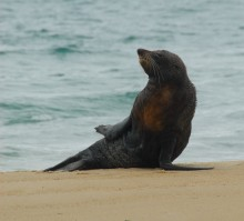 ... and meet a seal too.