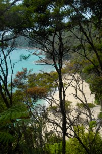 A slice of the Abel Tasman coast as seen from the Coast Trail.