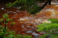 The river runs reddish-brown here, stained by tannins in the forest.