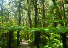 Trails like this (which is the Oparara Valley Track) crisscross the wet and wild West Coast.