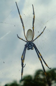 We saw spiders like this all over the Botanic Gardens and on a trail near Manly.