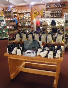 The first penguins we saw at the Phillip Island Penguin Parade.